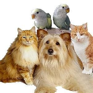 Do pet products really work?