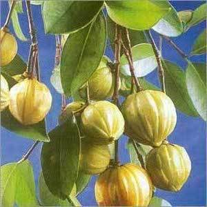 Is Garcinia Cambogia Worth All the Fuss? Does It Work for Fat Loss?
