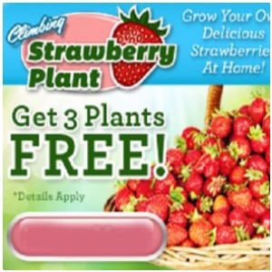 Does the Climbing Strawberry Plant work?