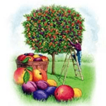 Does the Fruit Salad Tree Work?